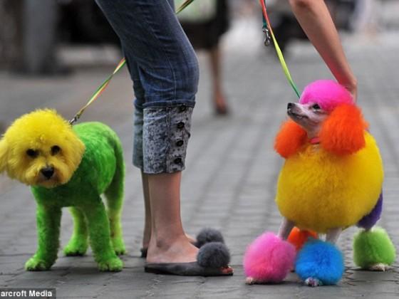 Bringt Farbe ins Leben - Tiere in neuem Look
