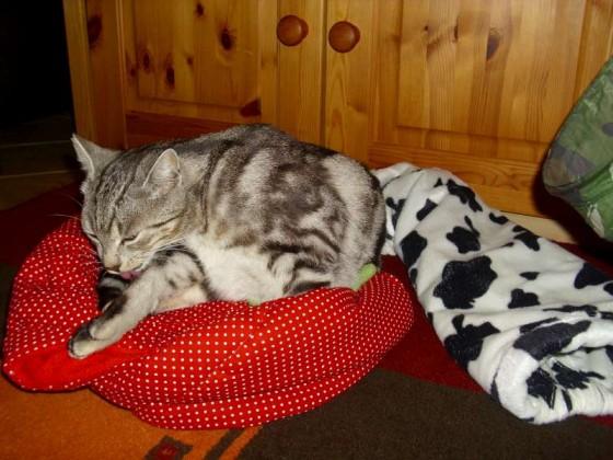 Mit Katzenminz bin ich dein Prinz