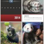 Frettchen4You Wandkalender 2014