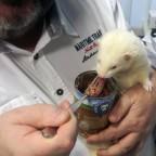 MeatLove Chicken Neue Rezeptur