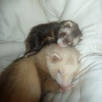 Balu und Sid kuscheln