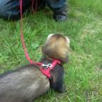 Das erste Spazierstehn mit MAX :D