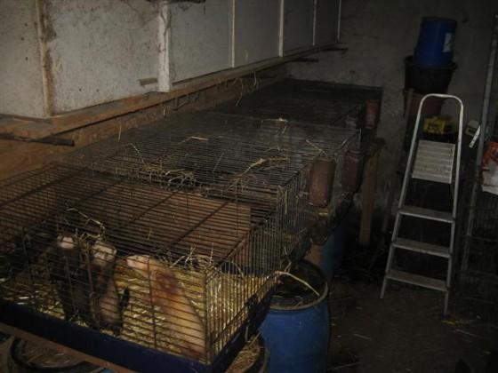 Was tun, wenn man solche armen Tiere vor sich hat?