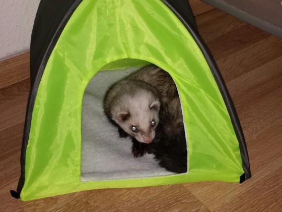 Bonny liebt ihr Zelt