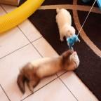 Sookie und Filou