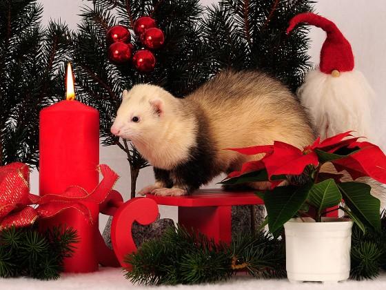 Kassiopeia Weihnachtsfoto