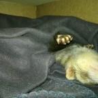 Muckel beim schlafen