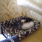 Paco schläft